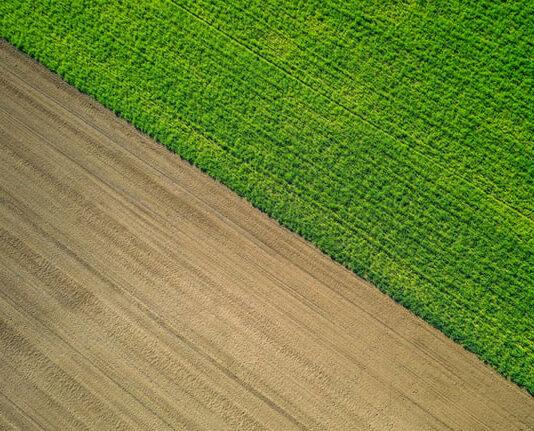 Środki ochrony roślin należy umiejętnie stosować